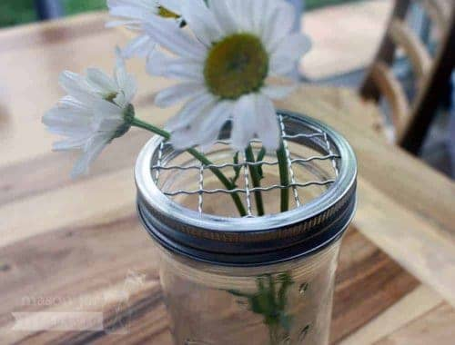 Shiny crinkly frog lid for wide mouth Mason jars
