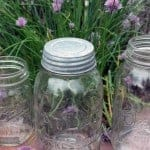 Galvanized vintage reproduction lid on Atlas Mason jar