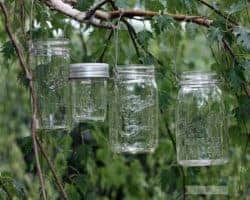 Four Mason jars with stainless steel wire handles hanging on birch tree branch
