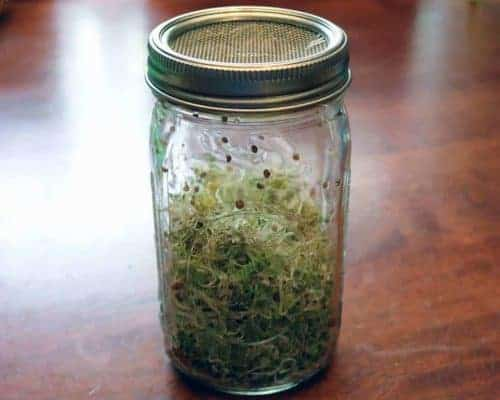 stainless-steel-mesh-sprouting-lid-band-growing-sprouts-wide-mouth-quart-mason-jar