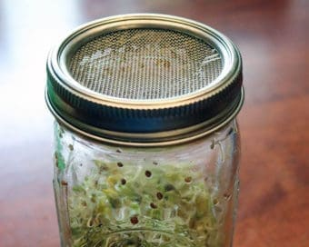 stainless-steel-mesh-sprouting-lid-band-growing-sprouts-wide-mouth-quart-mason-jar-closeup