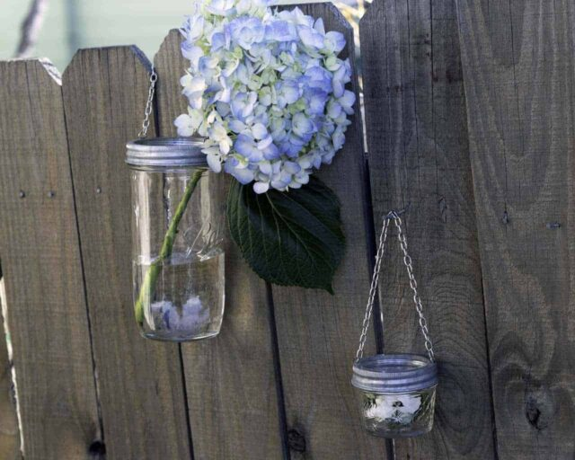 galvanized-metal-band-ring-with-chain-hanging-handle-regular-wide-mouth-mason-jars-flowers-fence