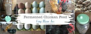 mason-jar-lifestyle-fermented-chicken-feed-backyard-hens-urban-farming-organic-probiotic-make-your-own-homemade-diy-blog-post-header